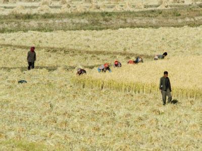 Nordkorea ist auf den Import von Nahrungsmitteln angewiesen.