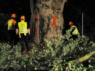 Bauarbeiter holzen im Stuttgarter Schlossgarten Bäume für das umstrittene Bahnprojekt ab.