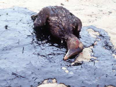 Tote Ente im Öl