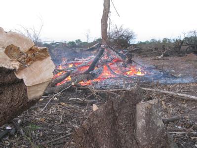 Illegale Rodung in Argentinien: Wenn Wald in Ackerfläche umgewandelt wird, verlieren viele Arten ihrem Lebensraum. Archivfoto: Iris Barth