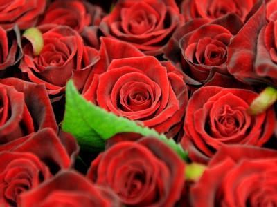 In Rosen können giftige Chemikalien stecken. Foto: Angelika Warmuth / Archiv