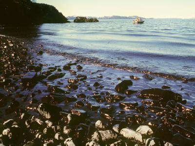 «Exxon Valdez» hinterließ gewaltige Schäden