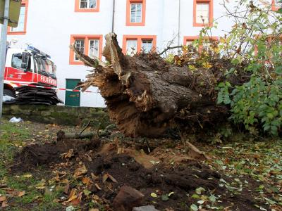 ImNovember 2012 stürzte dieser Baum in Trier um und verletzte eine Fußgängerin tödlich. Foto: Thomas Frey /Archiv