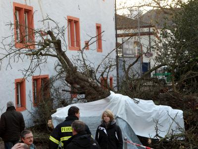 Der Baum brach oberhalb der Wurzel ab, stürzte um und begrub zwei Menschen unter sich. Foto: Thomas Frey /Archiv