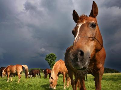 Verbände rechnen mit hohen Belastungen für die Pferdebranche. Foto: Karl-Josef Hildenbrand