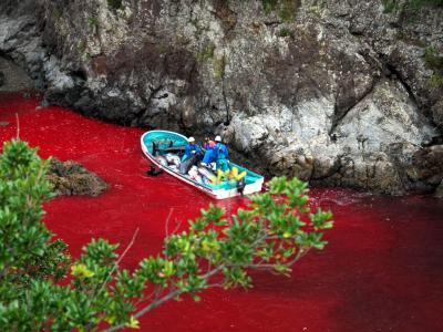 Das alljährlich stattfindende Gemetzel stößt weltweit auf Empörung. Foto: Sea Shepherd Conservation / Archiv