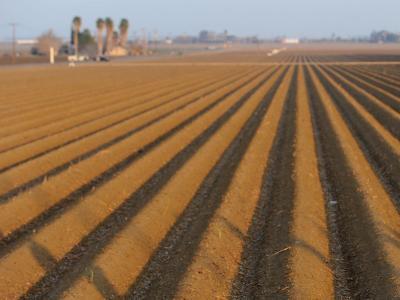 Kalifornien leidet seit Monaten unter extremer Trockenheit. Foto: Wally Skalij