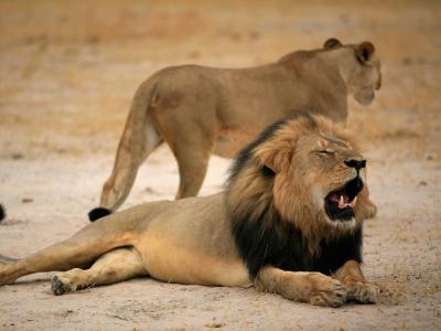 L�we Cecil