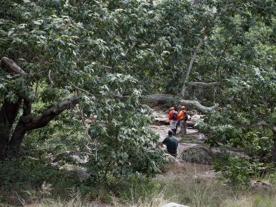 Rettungskräfte suchen im Tonto National Forest, bei Payson, Arizona, USA, in der Nähe der Water Wheel Campinganlage nach vermissten Schwimmern. Foto: Alexis Bechman