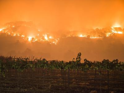 Ein Buschbrand wütet in Napa County in der Nähe der Weinberge. Die Zahl der Toten in Kalifornien steigt. Foto: Stuart Palley