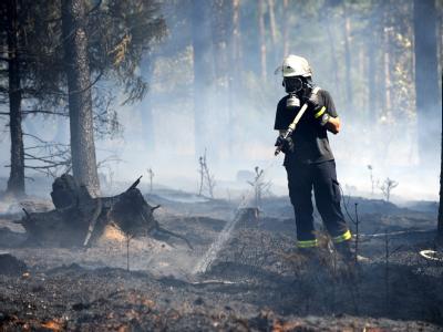 Feuerwehrleute löschen den Waldbrand. Es brannte auf mehr als 95 000 Quadratmetern Fläche, etwa 170 Feuerwehrleute waren im Einsatz.