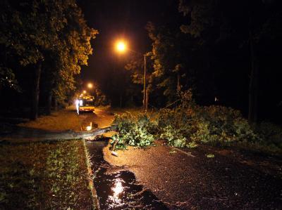 Ein umgestürzter Baum blockiert eine Straße im polnischen Lodz.
